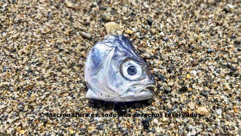 Cabeza de pescado en orilla del mar. Foto portada para el reportaje ¿Los peces sienten dolor?