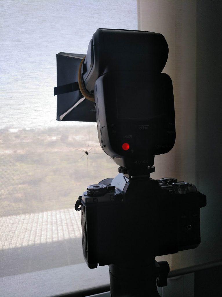 Una cámara con flash apunta a una araña patona que esta sobre una cortina de una habitación