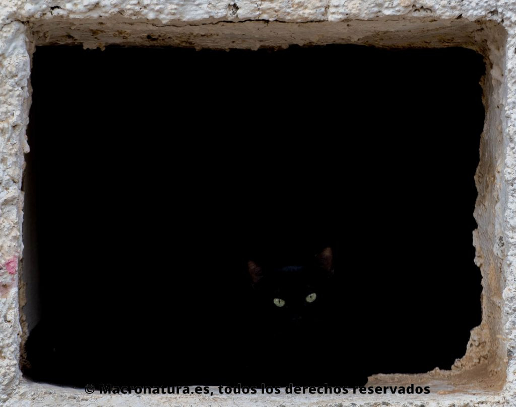 El confinamiento humano, ¿un respiro para los animales? Un gato negro en un fondo oscuro donde sólo se observan los ojos y parte de las orejas