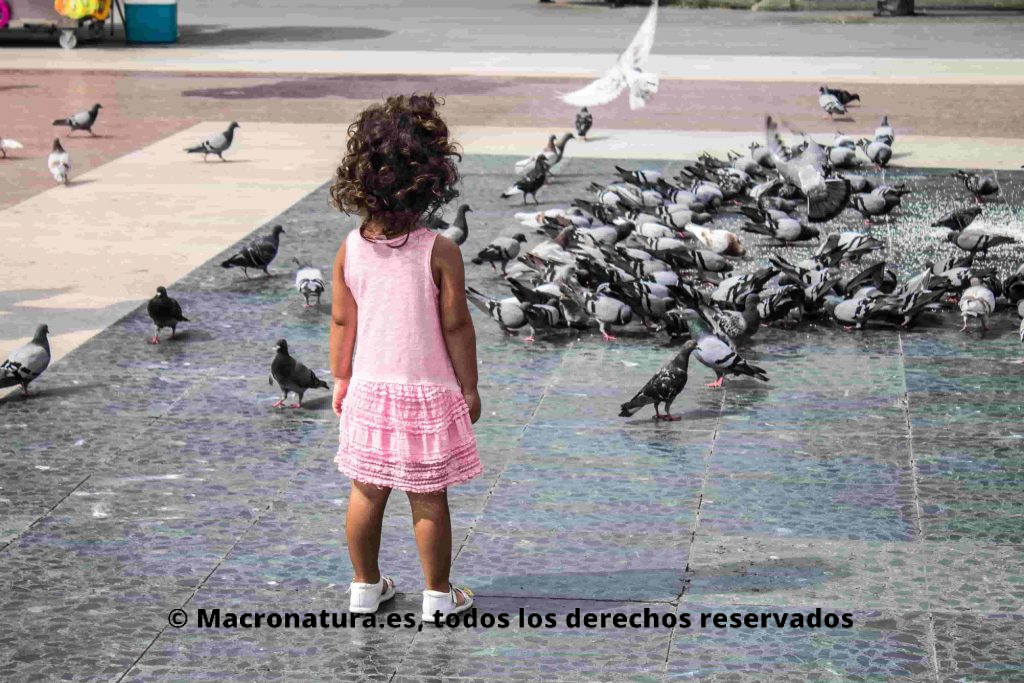 Una niña en una plaza observando varias Palomas doméstica Columba livia