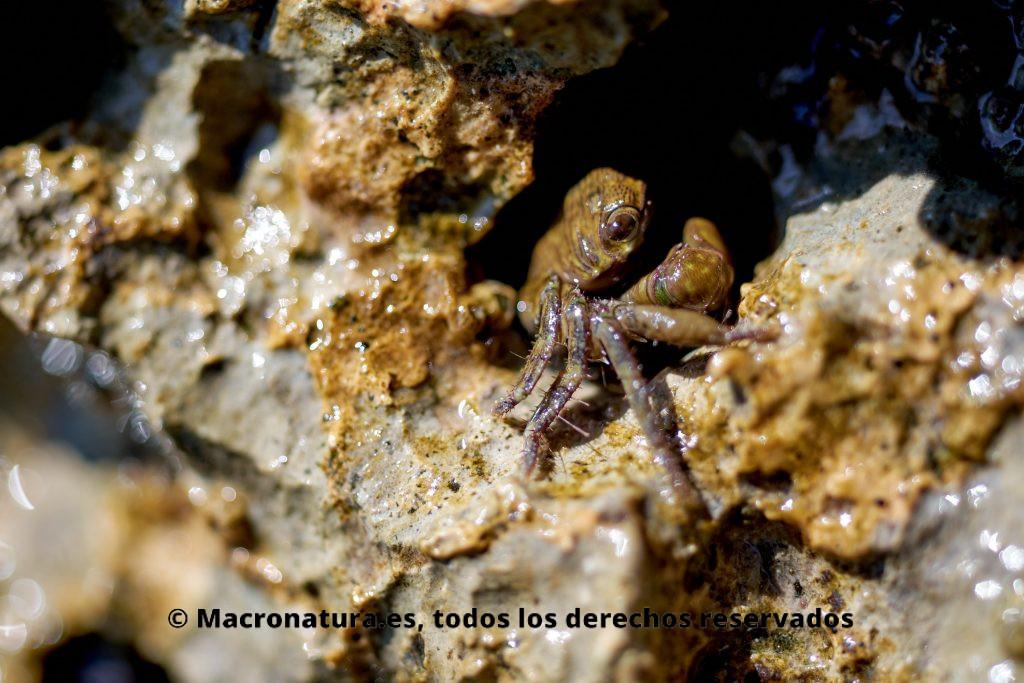 Cangrejo en el hueco de una roca