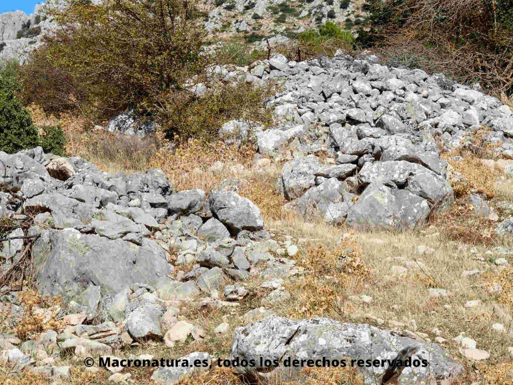 Pedregal. Piedras grises grandes. Guía para fotografiar insectos