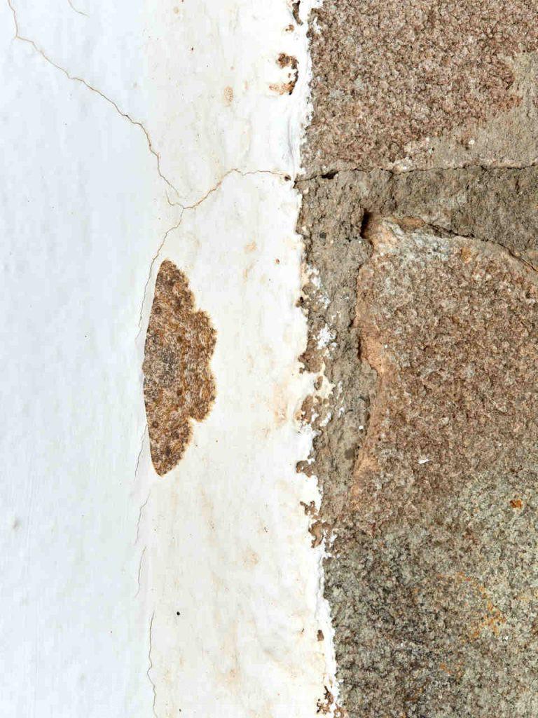 Mariposa nocturna Charissa mucidaria sobre una pared blanca junto con ladrillos de piedra del mismo color
